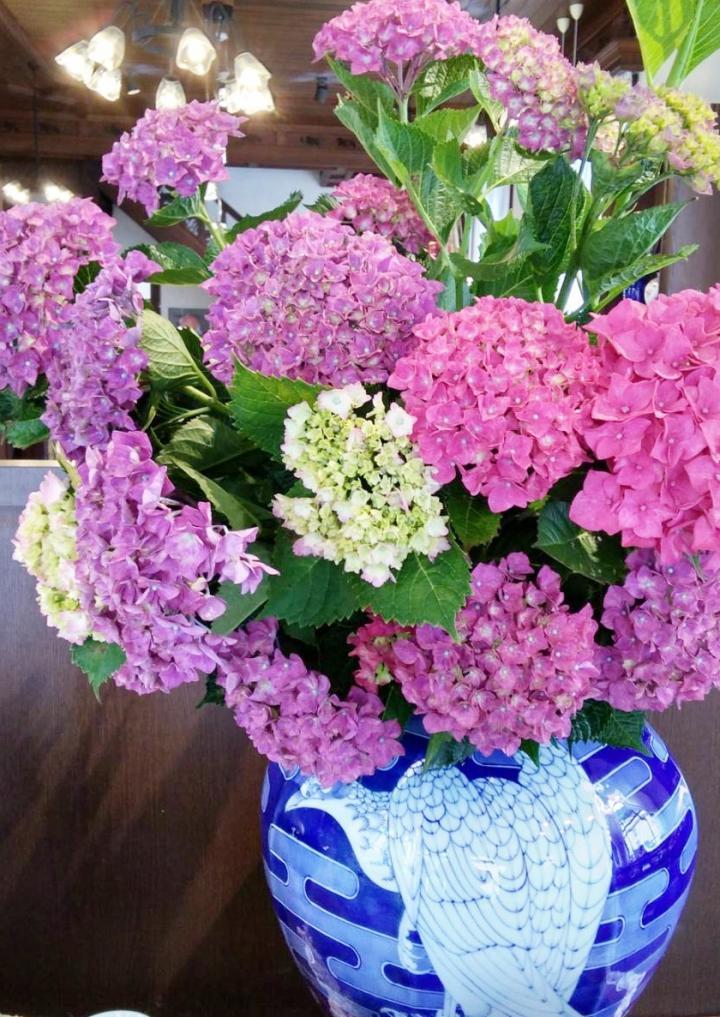正面ディスプレイ 紫陽花